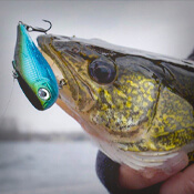 Clearance Lures & Bait