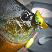 Panfish Hard Baits