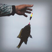 Panfish Floats & Bobbers