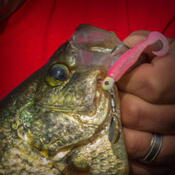 Panfish Spinnerbaits