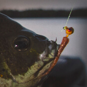 Panfish Jig Heads